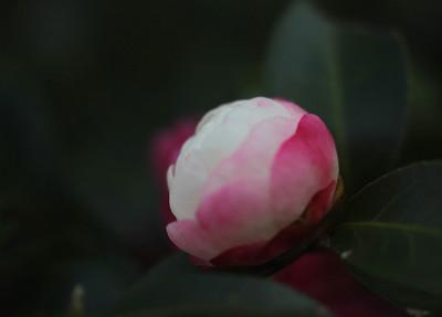Img_198910